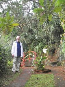 David in rain forest